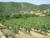 Vinhage ved stien opp til Chitignano, Rosina i bakgrunnen. Selv om Chitignano ligger litt utenfor de mest berømte vindistriktene, er det ikke noe å si på kvaliteten til den lokale vinen.