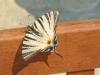Sommerfugl i all sin prakt, det er et rikt insektliv i området med mange spektakulære fargeprakter.